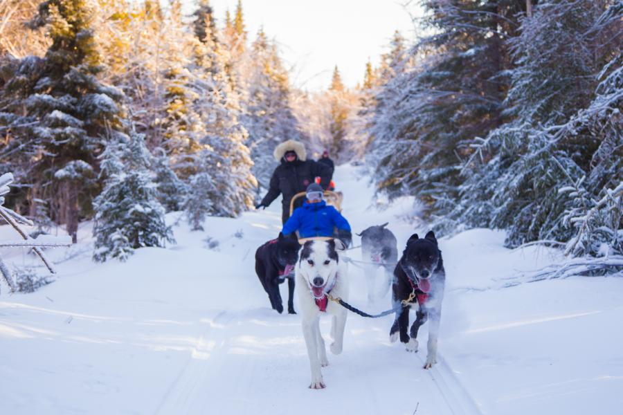 Dogsledding in Allardville (Chien Aventures)