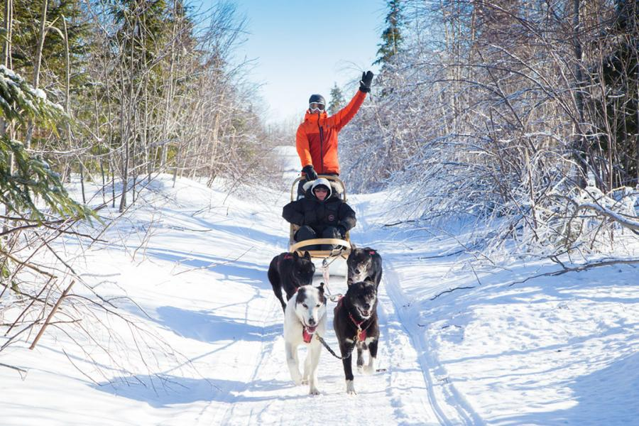 Dog sledding near Bathurst with Sled Dog Adventures