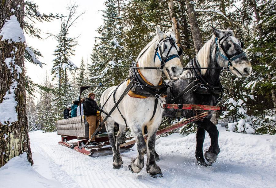 Sleigh ride in the nature of Mactaquac Provincial Park